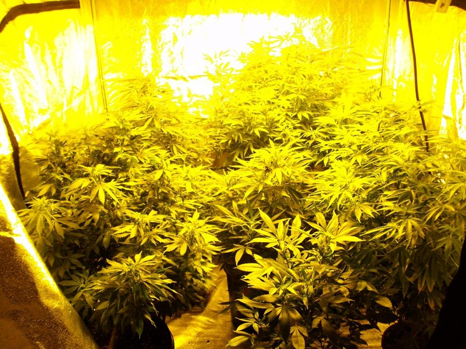 Grow Tent Buyers Guide