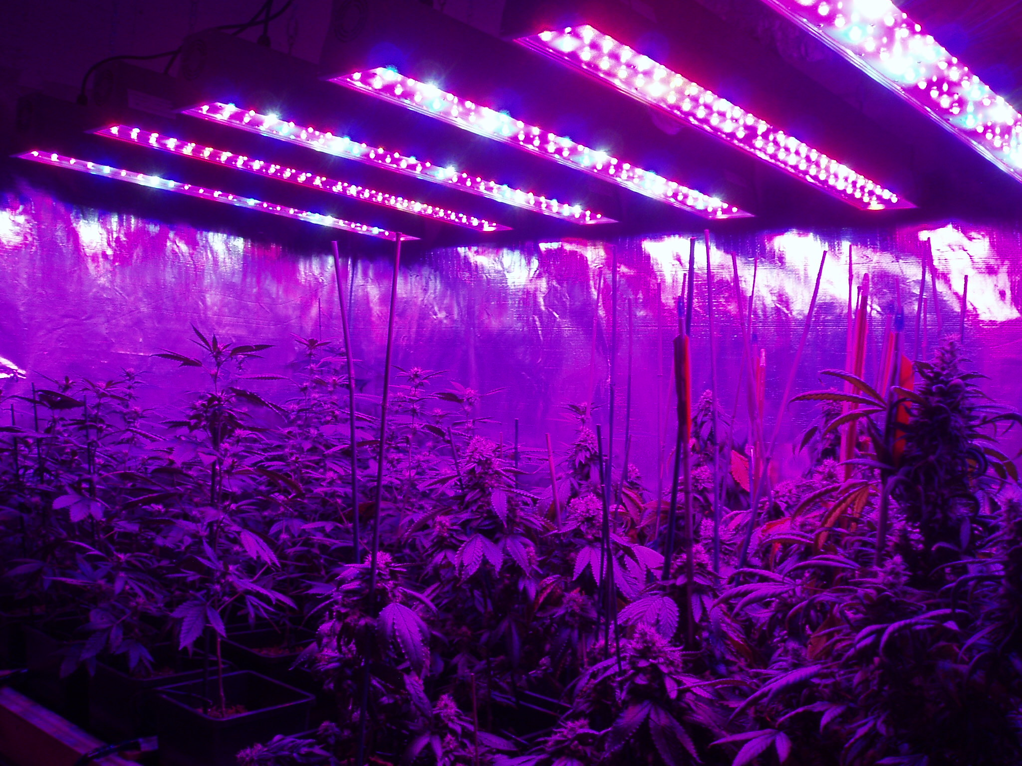 & Best LED Grow Lights for Weed on Amazon azcodes.com