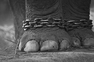 elephantchains_6807