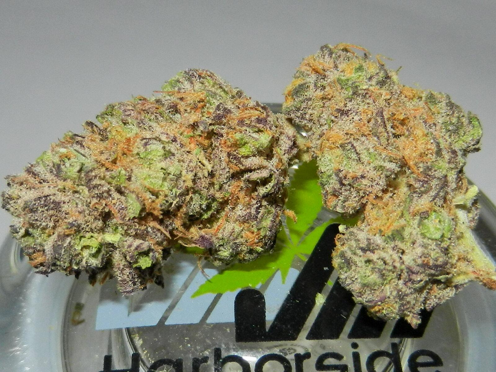 Purple Urkle Review