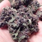 massive diesel marijuana strain looks hella puple