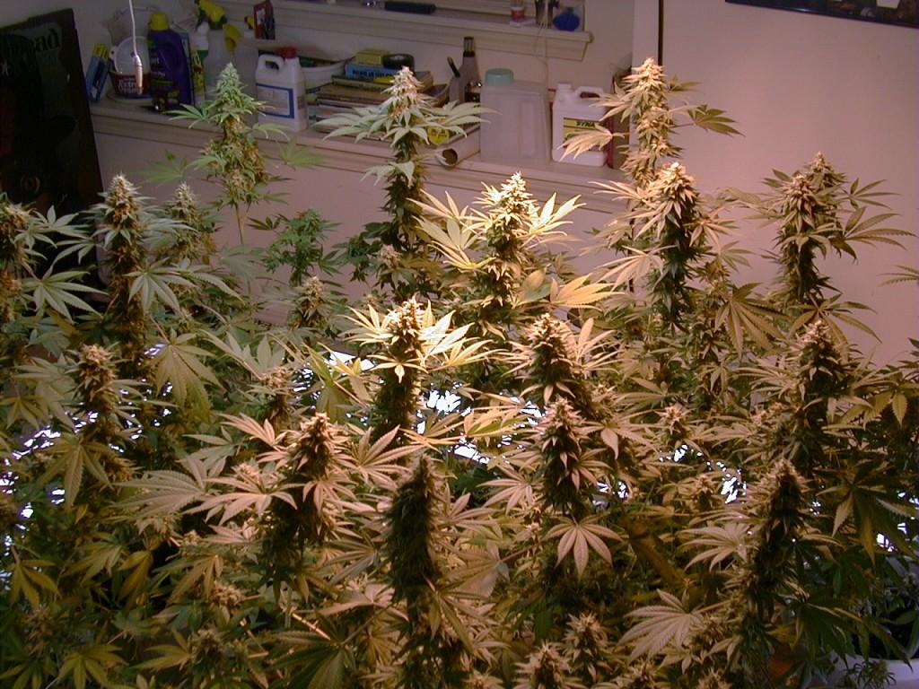 Pennsylvania Senate Approves Medical Marijuana Bill