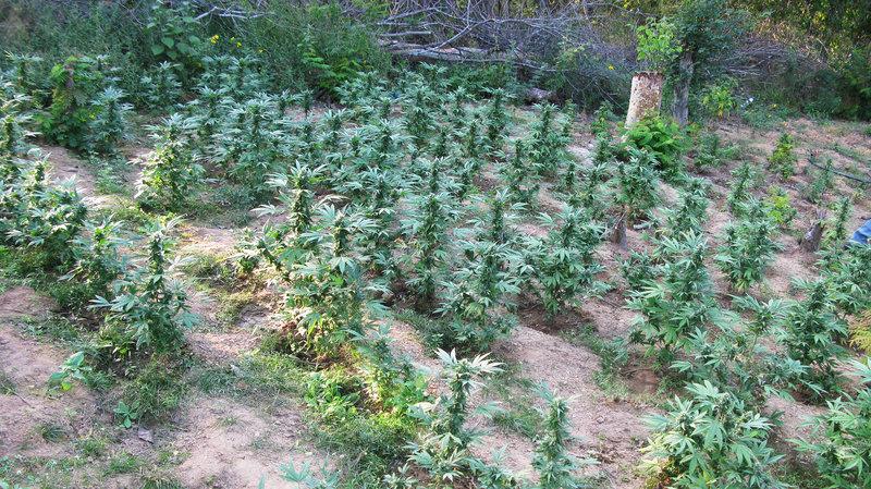 Legal U.S. Marijuana