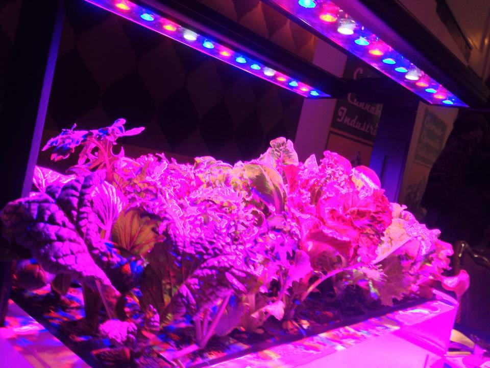 lights plants lighting to away need kept your growing led be far pretty pin generally from grow