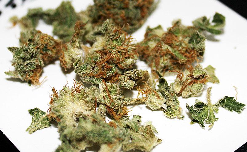 blueberry marijuana strain