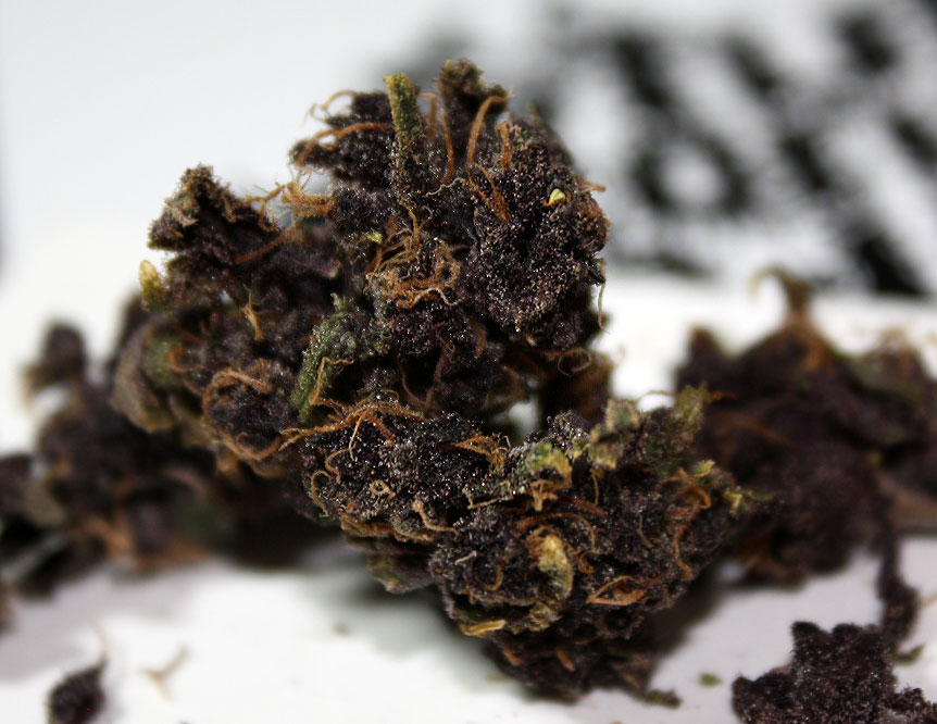 purple wendell berry weed review