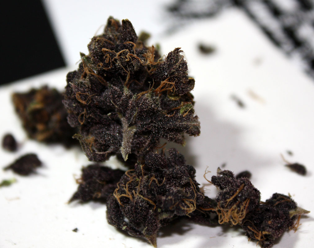 purple wendell berry weed