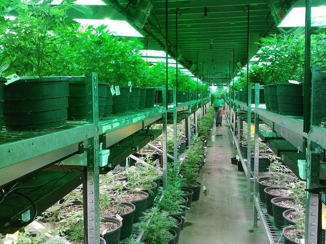 marijuana industry jobs