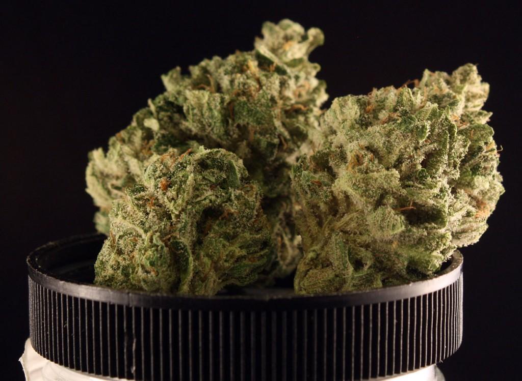 Blackberry Pie marijuana strain