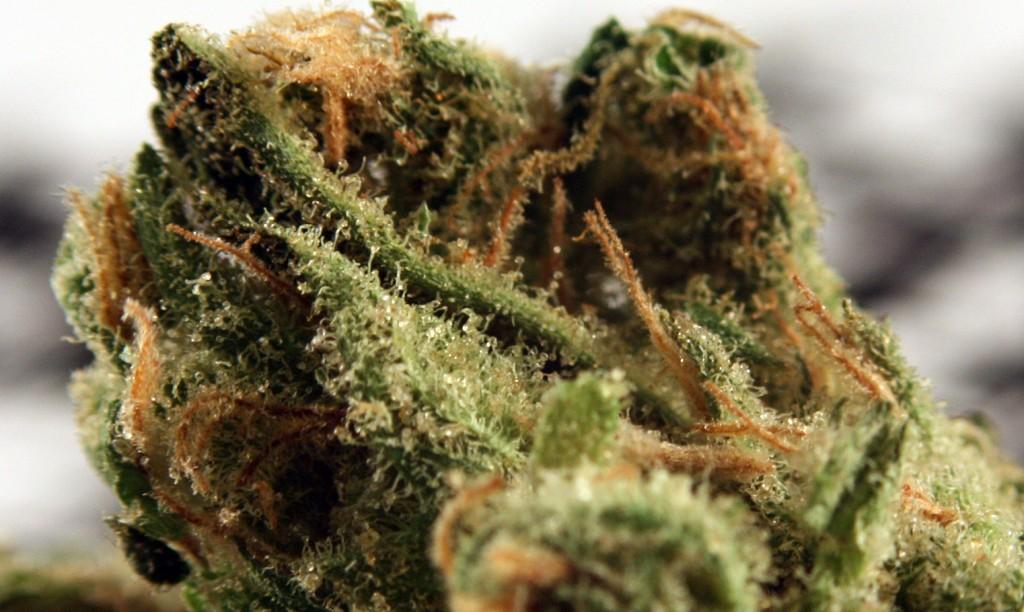 Golden Pineapple weed