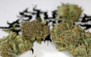 Grunk Marijuana Strain