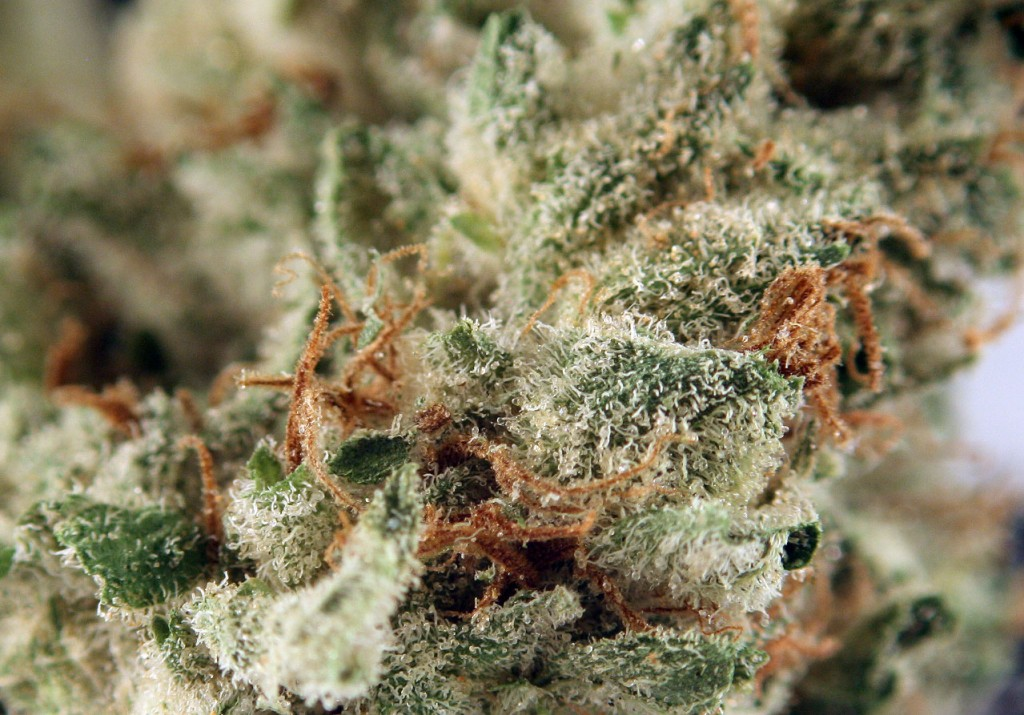 Snow Monster Weed Strain