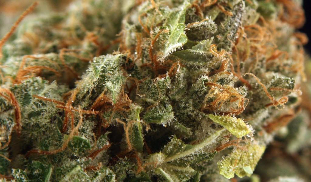Gorilla Glue Marijuana Strain