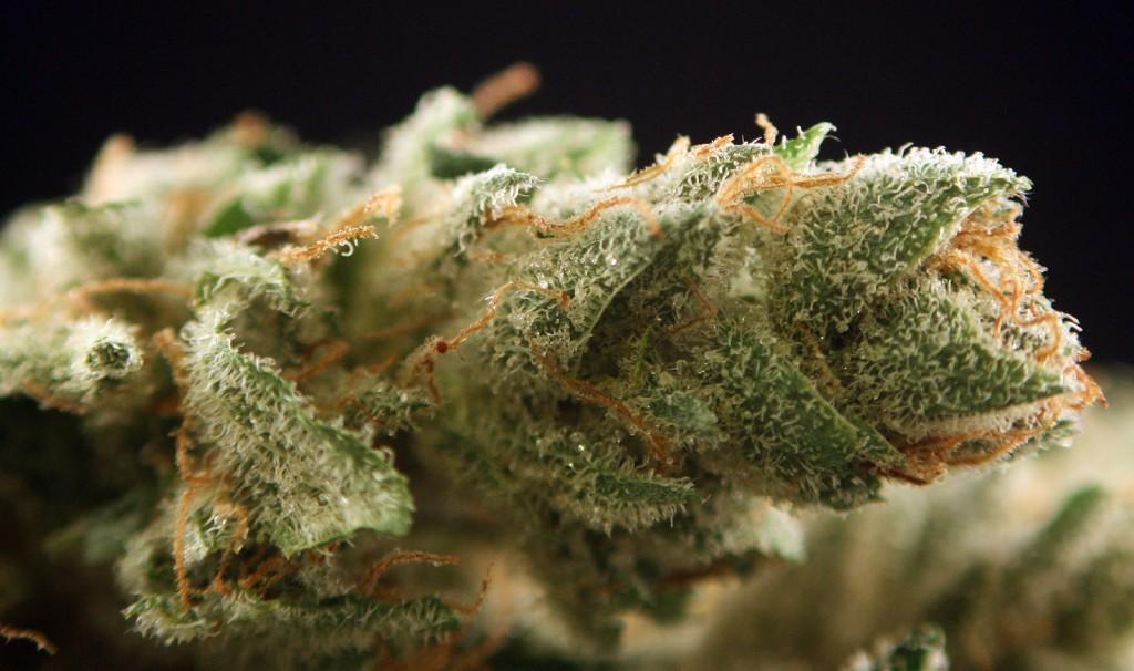 OG Chem Marijuana Strain Review