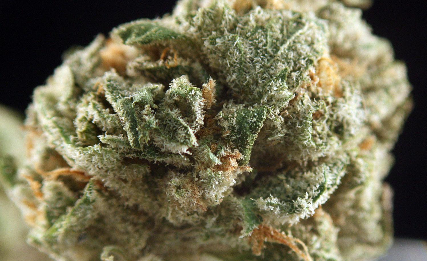 Tangerine Dream strain