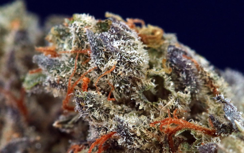 LA Confidential Weed