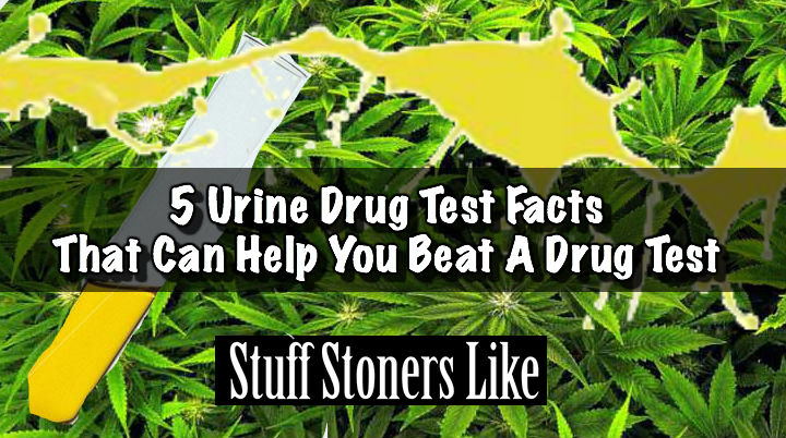 5 Urine Drug Test Facts That Can Help You Beat A Drug Test