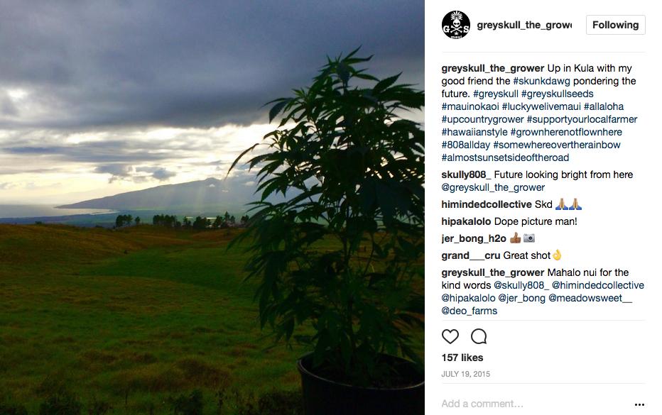 GreySkull The Grower Instagram 2