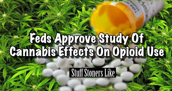 hero opioid study