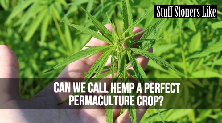 Can we call hemp a perfect permaculture crop