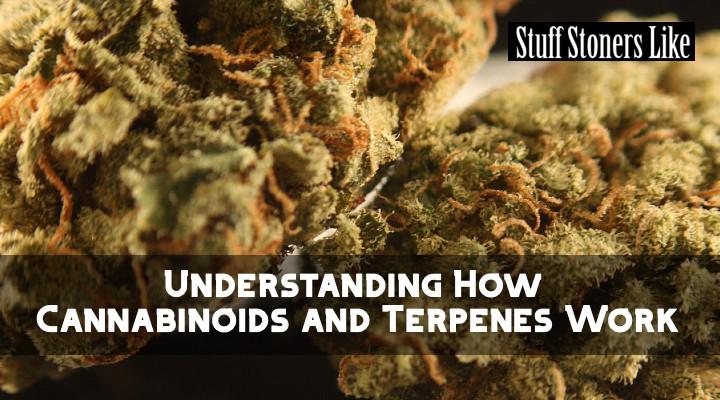 How Cannabinoids and Terpenes Work